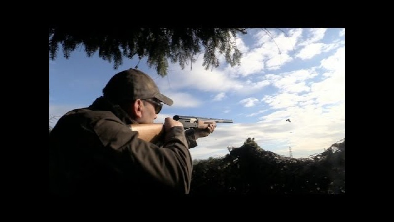 The Shooting Show — pigeons and muntjac with Geoff Garrod PLUS an interview with Amber Hill