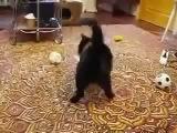 Кот и ласка (Драка)