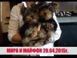 Добрый друг щенок Мира и Май Фон играют 3.5 месяца.