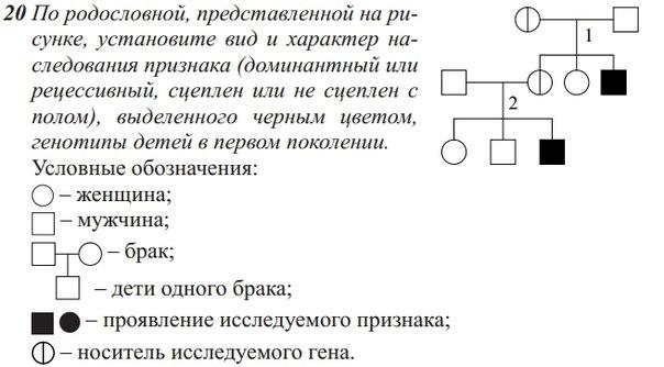 #биология_практика_генетика