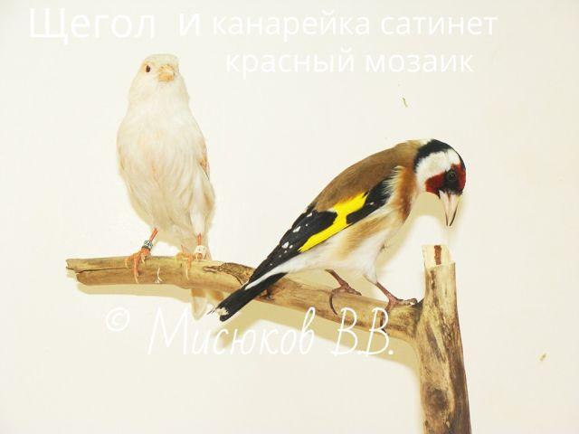Фотографии моих птиц  5rWs8s_gwoE