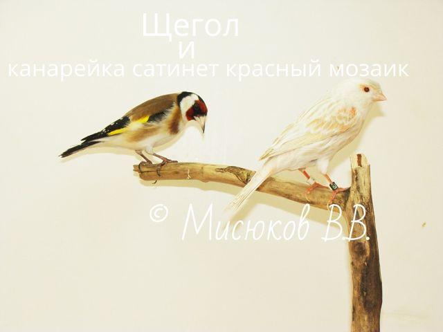 Фотографии моих птиц  6jhFdhwWTcY
