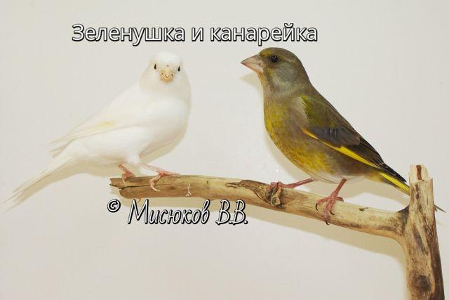 Фотографии моих птиц  J2auCpfSF0Q