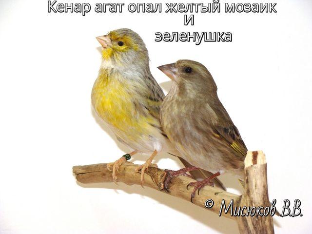 Фотографии моих птиц  OWi0O3sv06E