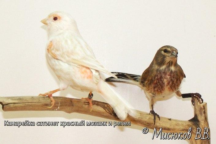 Фотографии моих птиц  -xyJdfycZrk