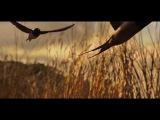 Sand Martins and Barn Swallows (Nicholas Gunn - The Swallows Of Na' Lu'um)