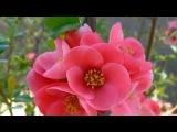 Андрей Весенин - А ты как весна