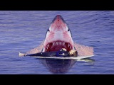 Акула съела 13 летнего серфингиста