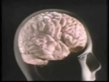The Brain - Language and speech, broca´s and wernicke´s area
