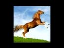 Барбарики - Далеко, далеко ускакала в поле молодая лошадь