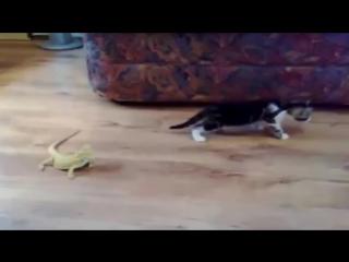 КОТЁНОК охотится на ОГРОМНЫХ ЯЩЕРИЦ ! XDD ( коты котята кошки кошеня кошенята воран хамелеон ящерицы ящерица ящірка ящірки п