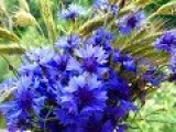 Синева...   Слово, изменяющее пространство...
