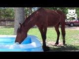 Horse splashes around in a kiddie pool