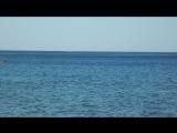 Анапа дельфины