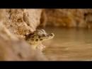 BBC Дикая Бразилия Часть 3 Испытание засухой HD