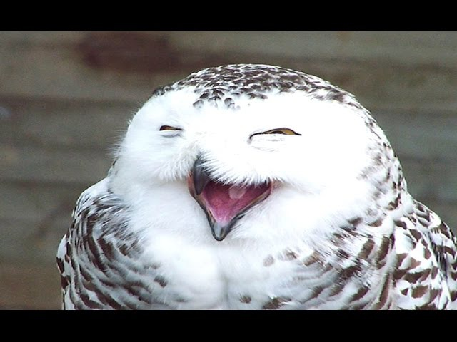 Funny Cute Owl Videos Compilation 2014 [NEW]