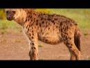 ТОП 10 Ужасные Спаривания Животных в сравнении с Человеком.mp4