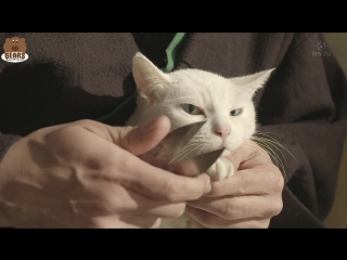 [FSG Bears] Кошка и самурай 2 / Neko zamurai 2 (3/11)