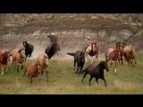 Красивое видео про лошадей
