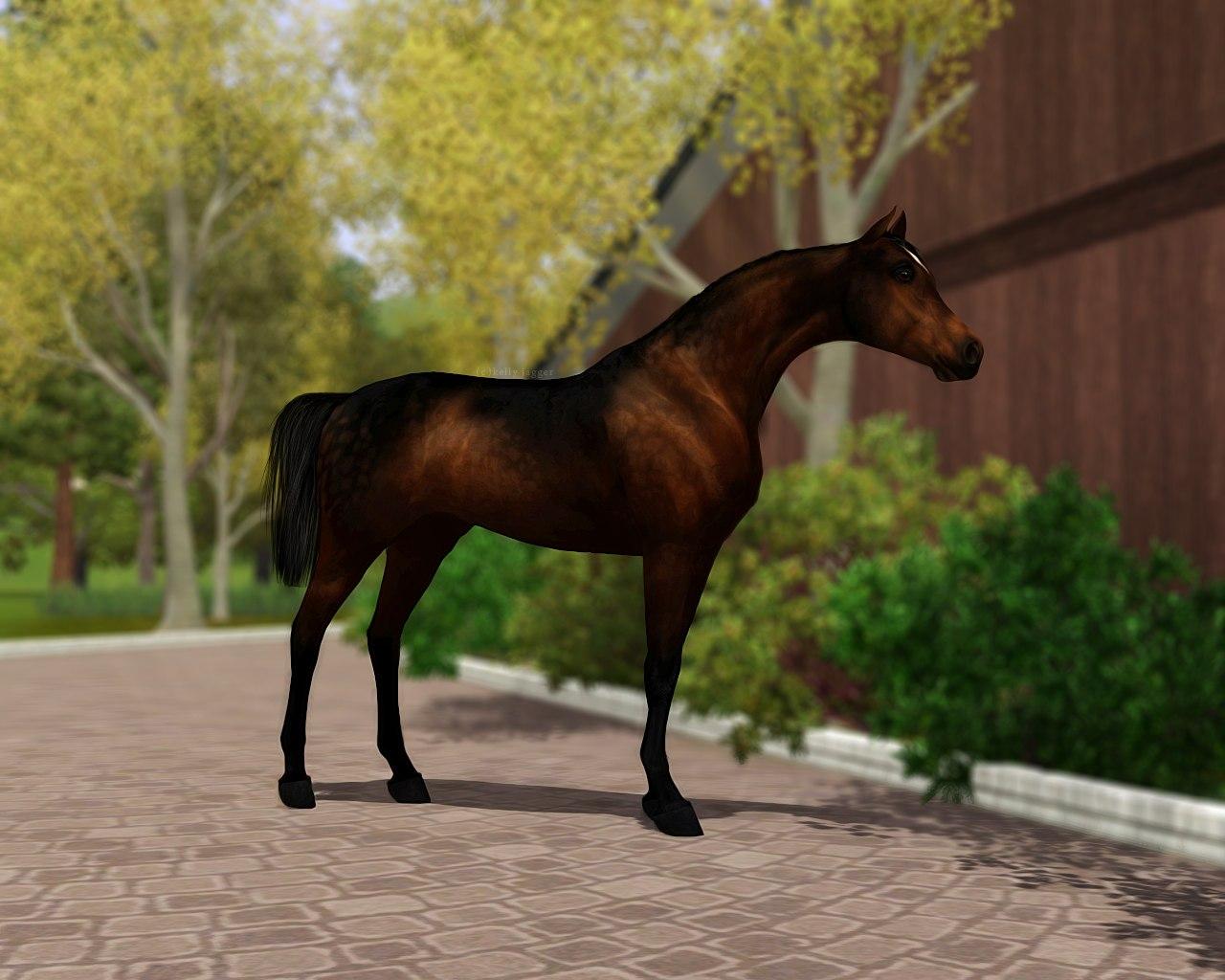 Регистрация лошадей в RHF 2 - Страница 5 _bRzoOSZyrM