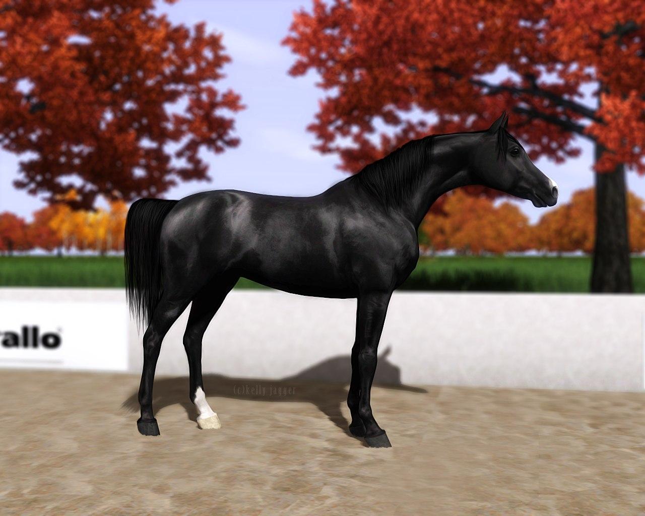 Регистрация лошадей в RHF 2 - Страница 5 7O6Gei7PXkw