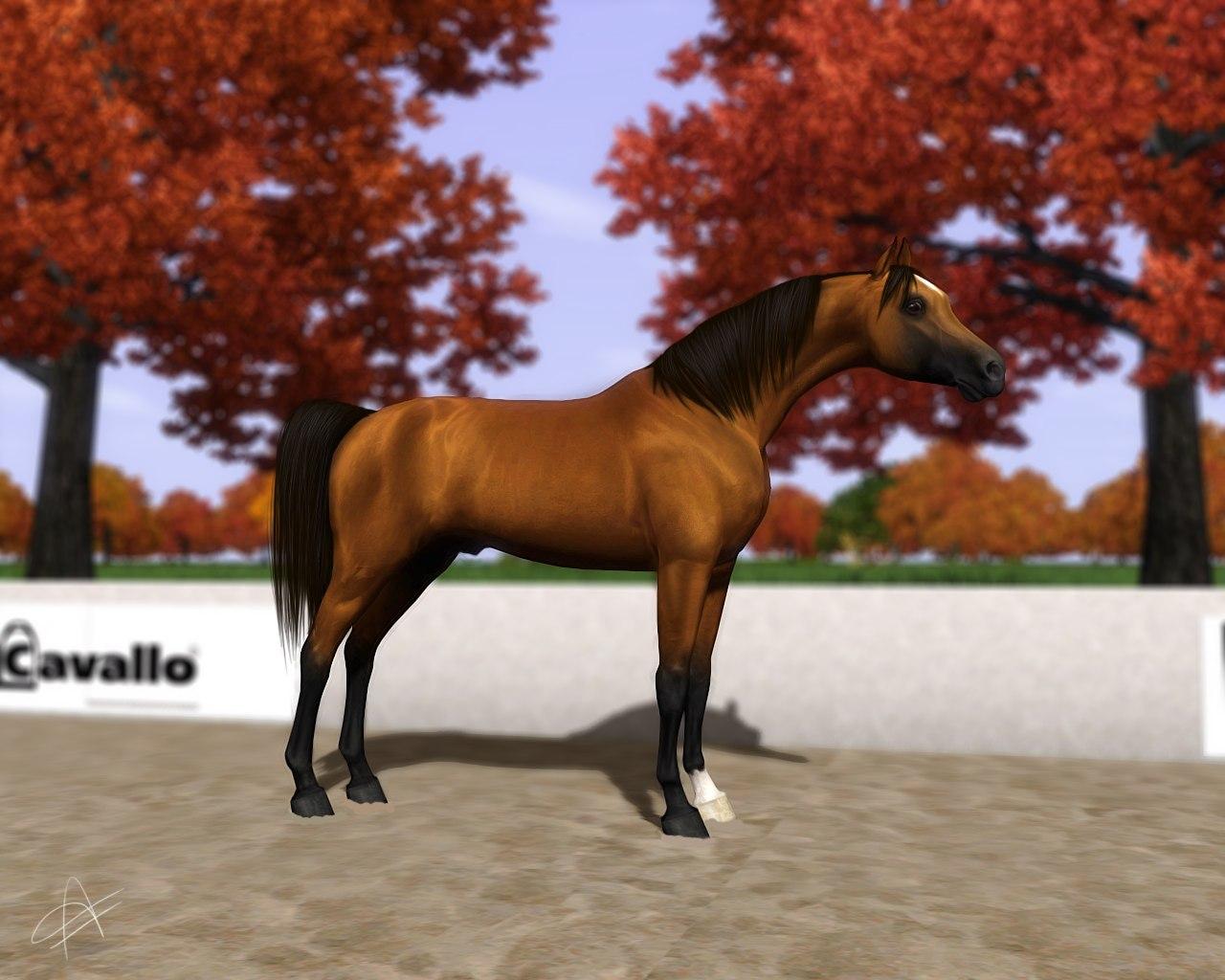 Регистрация лошадей в RHF 2 - Страница 5 Nl17tPXbfiM