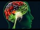 Питание для мозга и настроения серотонин Какие продукты поднимают настроение и питают мозг