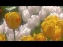 Весна и Оркестр Поля Мориа Сон трава Paul Mauria