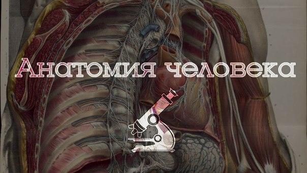 400 анатомических видео для студентов 1 и 2 курса