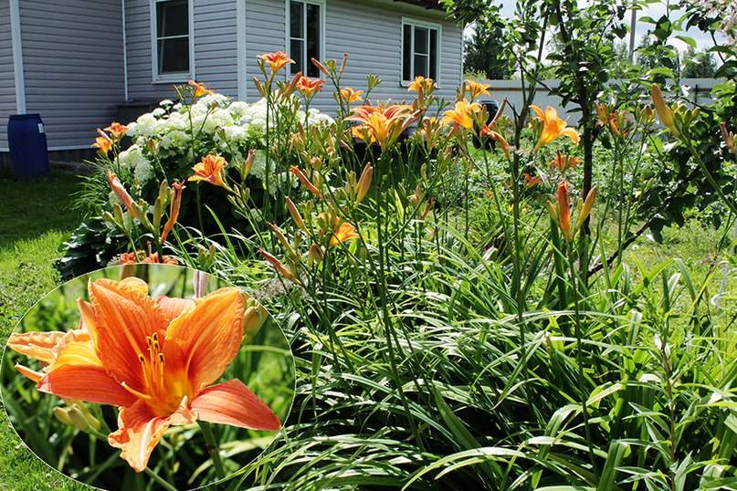Многолетние растения. Подкормка