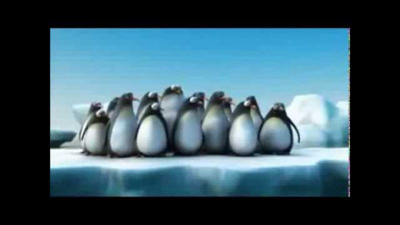 Короткий мультфильм - крабы , муравьи , пингвины.