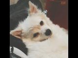 "DONY on Instagram: ""내품에 누워잠든 그녀?? 이런게 #럽스타그램 이지??! #빈이"""
