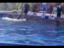 Выступление в дельфинарии г.Яровое ч.1