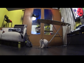 квадрокоптер VS кот