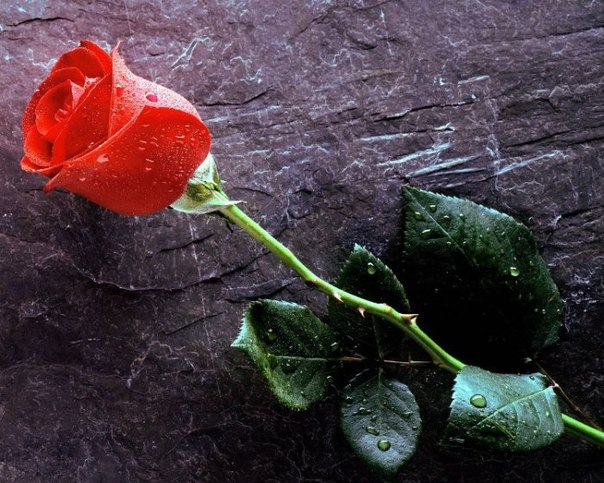 Для того чтобы правильно его истолковать, необходимо обращать внимание на состояние цветов, окружающую обстановку, а также собственные действия – получали вы букет цветов во сне или дарили.