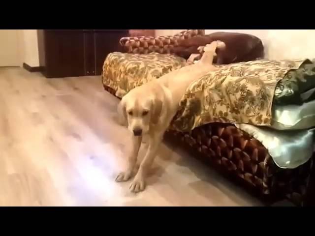 Собака встает с кровати
