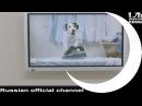TV advertising - 1 место 2013г. / Ночь пожирателей рекламы приз зрительских симпатий