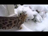 Первый снег для котов и кошек! Приколы 2015 Fail Compilation