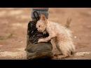 5 ПРАВДИВЫХ историй возвращающих веру в человечность Невероятные истории спасение животных людей