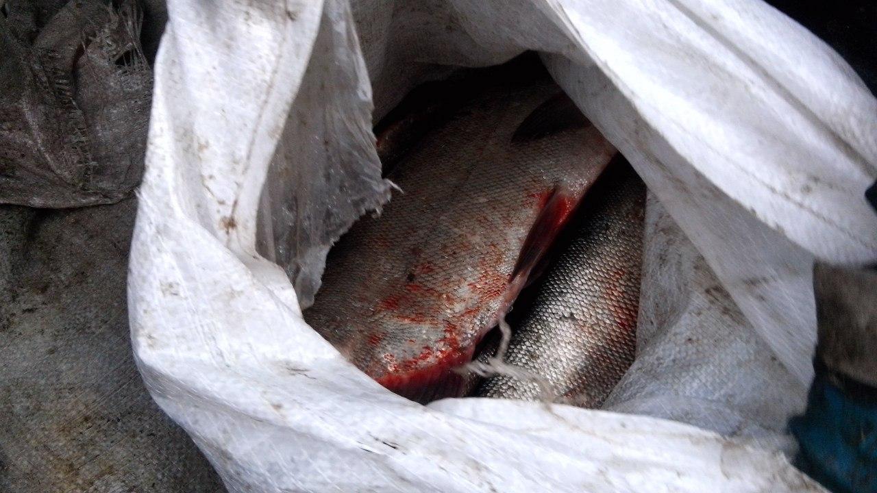 Донские ветеринарные инспекторы не пустили в Ростов 700 кг рыбы без документов