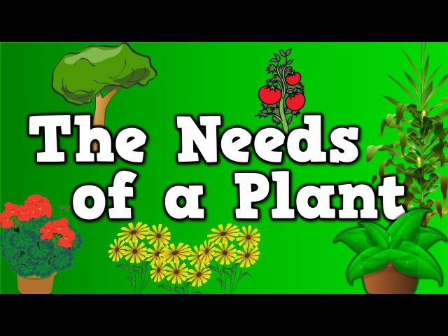 The Needs of a Plant song for kids about 5 things plants need to live
