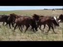 Монголия в тени Чингисхана (sl)