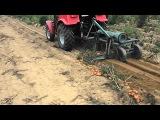 Burgonya betakarítás 2012. (Potato harvest) MTZ 320.4 + Kuxmann betakarító