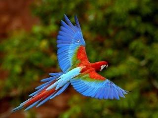 Дикая природа Амазонки HD