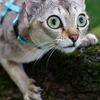 Сингапурская кошка или страсти по Сингапуре!