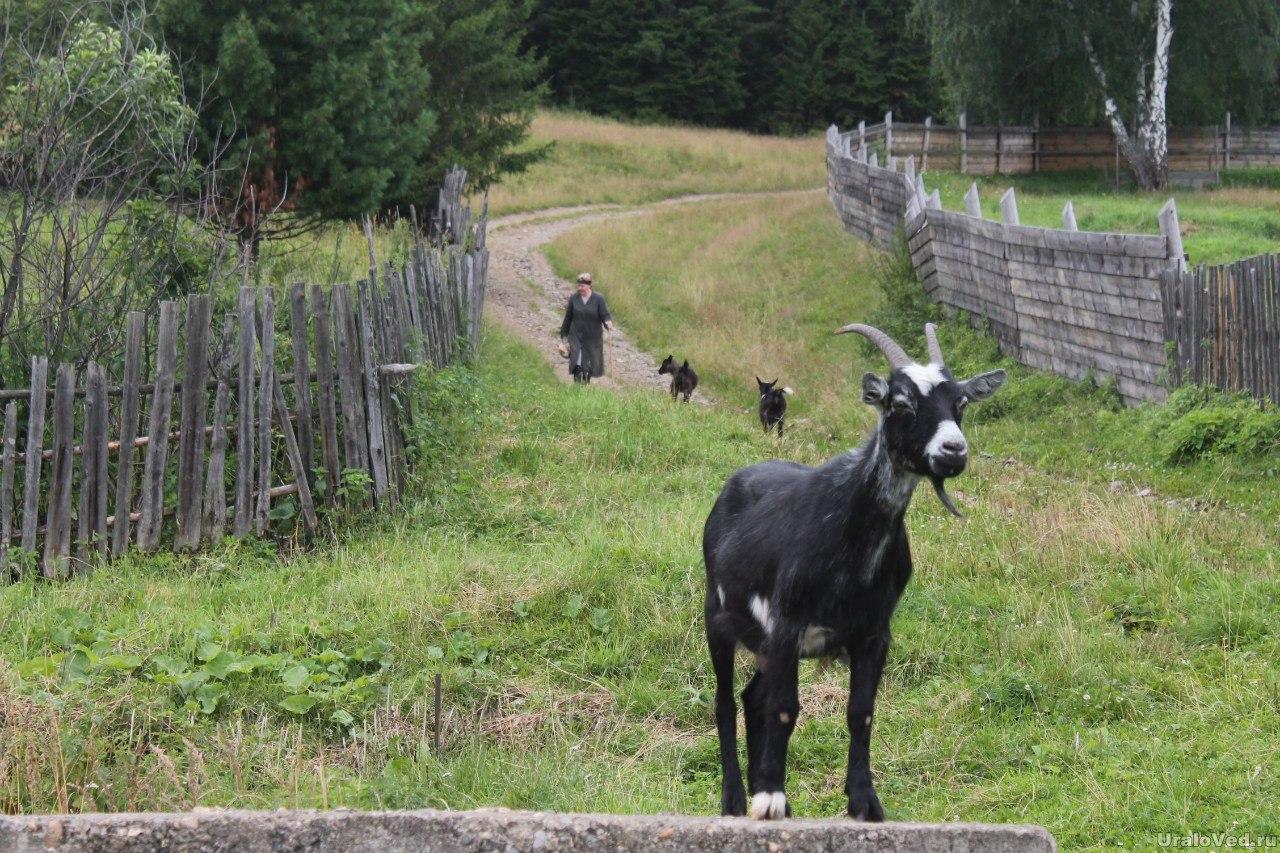Верхнесергинский козел