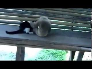КОТ И ОБЕЗЬЯНА !!! приколы, коты, кошки, funny, cat, cats