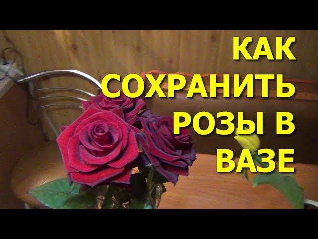 Как сохранить розы в вазе How to keep roses in a vase