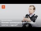Шеваль Евгений - Наука о клетке