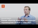 Евгений Шеваль - Живая клетка